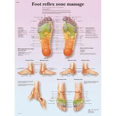 Foot Massage Reflex Zone Anatomical Laminated Chart - 20