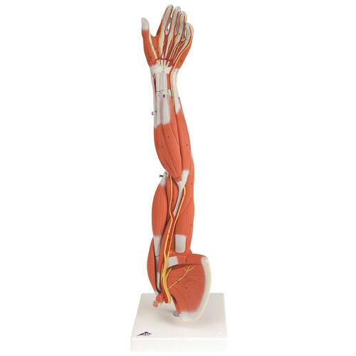 Classic Muscular Left Arm 12 4556 Bizchair