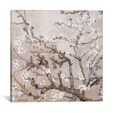 Almond Branches In Bloom San Remy, C. 1890 by Vincent van Gogh - Tan Gallery Wrapped Canvas Artwork - 37