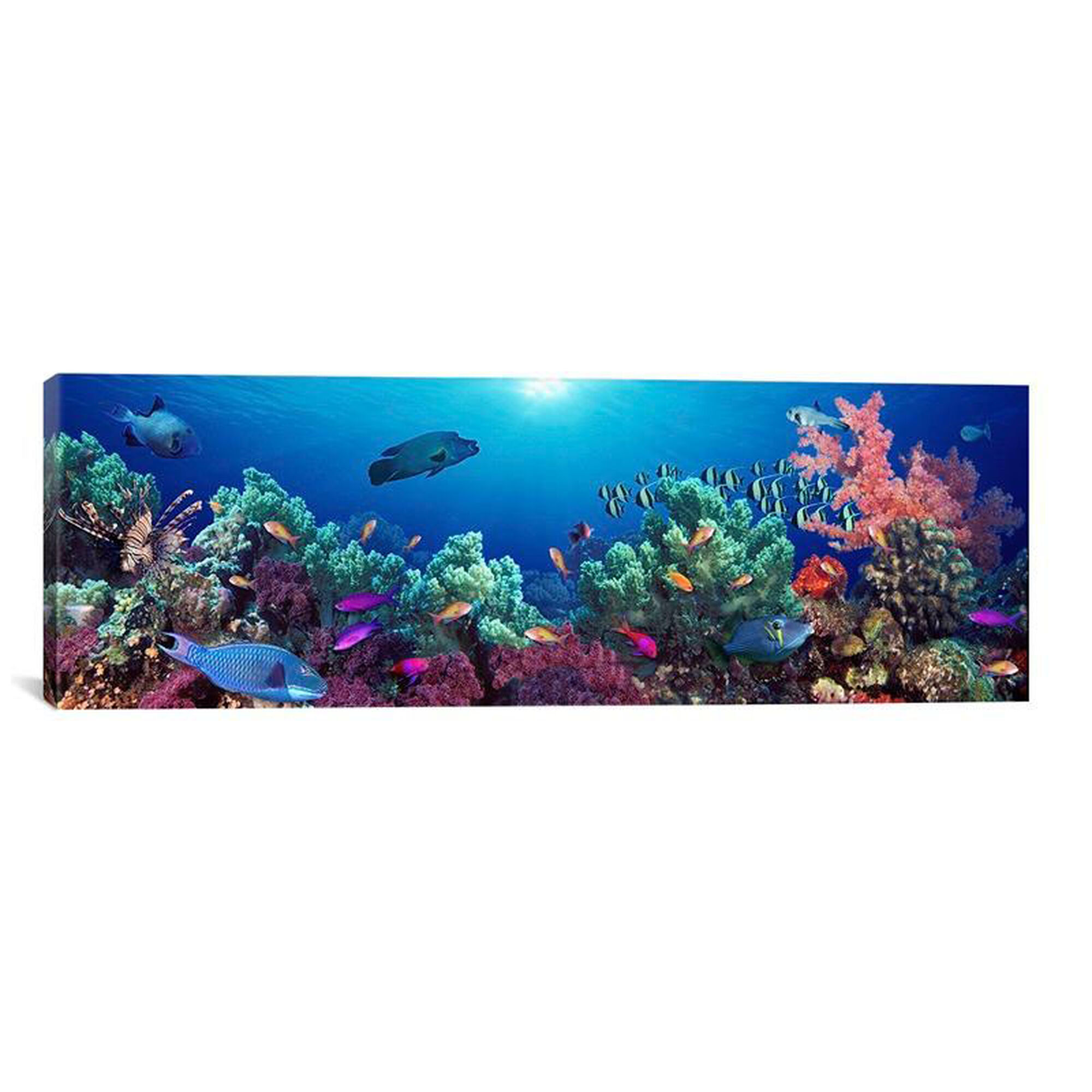 Wrapped canvas artwork pim5751 1pc3 36x12 for Fish delivery near me