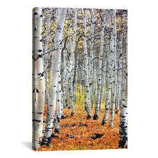 Autumn In Aspen by Unknown Artist Gallery Wrapped Canvas Artwork