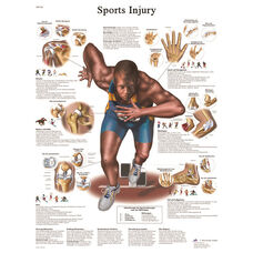Sports Related Injuries Anatomical Adhesive Back Chart - 18